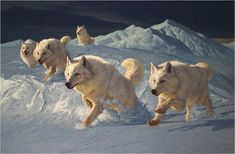 white wolves in snow - wolf painting by Greg Beecham