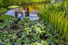 The World Vision Garden at the RHS Chelsea Flower Show / RHS Gardening