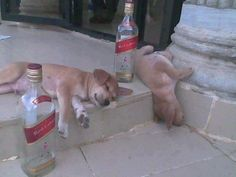 these puppies are drunk, go home puppies