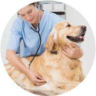 Choisissez une chouette assurance chien pour être remboursé de ses frais de santé