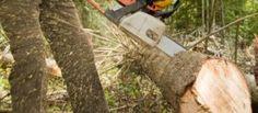 Attualità: #Tragedia in #Calabria 54enne si ferisce gravemente mentre taglia un albero (link: http://ift.tt/2bBFZLy )