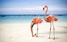 Flamingo Vs Elephant The Most Weird And Scary Photoshopped Hybrid Animals You'll Ever See Flamingo Wallpaper, Beach Wallpaper, Creepy Animals, Funny Animals, Cayo Coco, 4k Wallpaper For Mobile, Wild Nature, Weird And Wonderful, Pink Flamingos