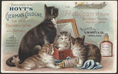 Perfumed with Hoyt's German cologne. The most fragrant and lasting of all perfumes. Use Rubifoam for the teeth. Deliciously flavored. Price: 25 cts a bottle - Victorian advertising card, c. 1894