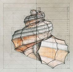 Venezuelan artist Rafael Araujo -- shell - geometry - fibonacci spiral - golden ratio - LOVE