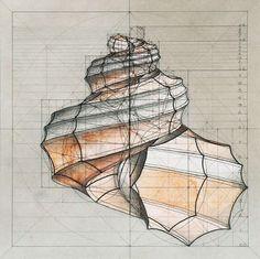Venezuelan artist Rafael Araujo -- shell - geometry - fibonacci spiral - golden ratio - LOVE