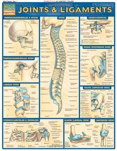 Joints & Ligaments (Quickstudy: Academic)/Inc. BarCharts