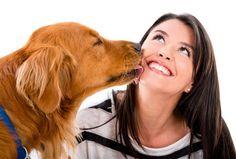 El lengüetazo de un perro y sus secretos