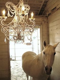 Haha, I love the idea of reusing an old chandelier to light a stall. It could make any filly feel like the barn queen:)
