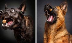 Fotógrafo captura momento exato em que cães tentam pegar comida no ar