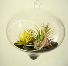 Retrofuturistic, glass globe terrarium kit, ionantha garden with black sand and accessories...