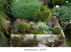 Hypertufa Planter Or Trough Stock Photo, Picture And Royalty Free Image. Pic. 78837434
