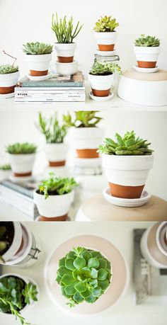 White Paint from DecoArt  Succulent Plants, Pots and Drainage Plates from Lowe's  Decorative Bowls from FindersKeepers Market  White Chest from Arhaus Furniture    http://offbeatandinspired.com/2013/05/30/painted-pots-succulents/