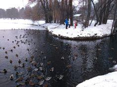 #пруд #утки