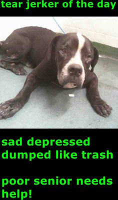 MARCO (A1702593) I am a male black and white American Bulldog mix. The shelter staff think I am about 8 years old and I weigh 75 pounds. I was found as a stray and I may be available for adoption on 06/09/2015. — hier: Miami Dade County Animal Services. https://www.facebook.com/urgentdogsofmiami/photos/pb.191859757515102.-2207520000.1433365950./986930991341304/?type=3&theater