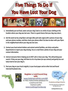 Tips to help you with your Lost Dog!  Register on helpinglostpets.com/ldfl