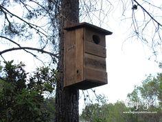 Caja nido para abubillas, controladoras naturales de plagas como la procesionaria de los pinos.   www.lagranjadebitxos.com Bird, Outdoor Decor, House, Image, Home Decor, Nesting Boxes, Birds, Homemade Home Decor, Haus