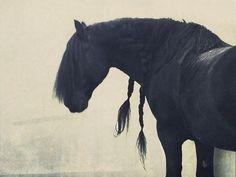 Braided Black Beauty (horse,braids,mane,black,pretty)