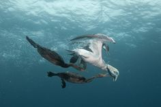 Dive robbers by Jean Tresfon