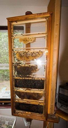 Obviously the whole reason to set up, maintain, and stock a beehive is to harvest honey. You will know that it is time to harvest the honey when you look i I Love Bees, Birds And The Bees, Bee Hive Plans, Honey Bee Hives, Honey Bees, Raising Bees, Buzz Bee, Bee House, Bee Farm