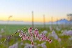 Morning Dew by sjodell