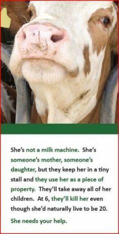 go vegan -  for her