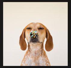 dog ;)