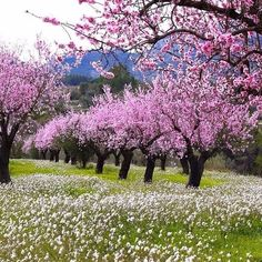 beautiful landscapes and flowers Beautiful Landscapes, Beautiful Gardens, Spring Landscape, Blossom Trees, Spring Blossom, Watercolor Landscape, Beautiful Butterflies, Nature Pictures, Amazing Nature