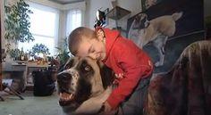 Um cão diferente que mudou a vida a uma criança diferente - AC Variedades