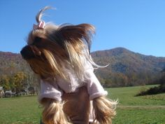 Gidget in the Smokey Mountains wearing her Oscar Newman sweater.. my little mountain girl!!  Daddy and Mommy's angel