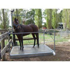 Horse Wash bay