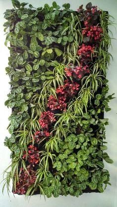 61 New Ideas house green wall plants - Jardin Vertical Fachada Herb Garden, Vegetable Garden, Garden Plants, Indoor Plants, House Plants, Garden Kids, Pot Plants, Balcony Garden, Vertikal Garden