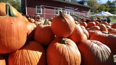 Boston Hill Farm: September and October at this North Andover orchard are apple and pumpkin picking months. Macintosh, Cortland, and Macoun apples are available to pick, and once you've filled your pecks, there's ice cream, a bakery, and a petting zoo.