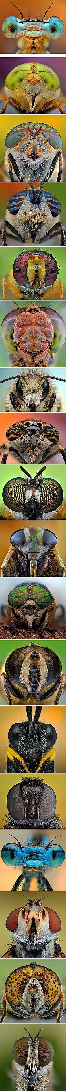 Фотограф Иренеуш Валедзик - коллекция глаза стрекоз, пчел и мух. (поверьте, такие фото стоят большого труда и денег.)