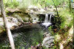 Waterfall suwannee river fl