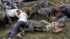 SandRamirez contra el maltrato animal. • www.luchandoporellos.es: A RAPA DAS BESTAS.