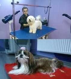 OlteniaBizz - GROOM LAND- Coafor si frizerie canina in Craiova