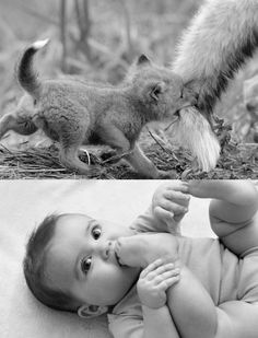 Baby Foxes Are Just Like Baby Humans