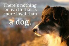 Nothing more loyal than a dog