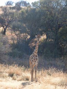 Sophie does International Wildlife Biology