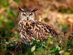 Owl's eyes, nature summer wallpaper 1024x768