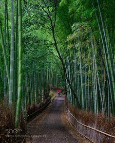 Magical Morning in Bamboo Forest http://ift.tt/1PwaAJe LandscapeGreenNikonRedRainKyotoJapanUmbrellaBambooBambooforest