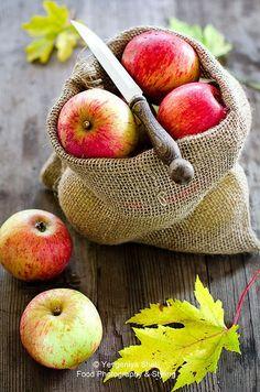 Judith D. Collins / fall / apples
