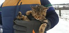 Man was out for a walk in the Cairngorms National Park, in the Scottish Highlands,and found a tiny tabby kitten which was actually a wild cat