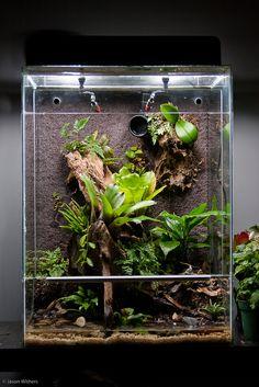 http://www.dendroboard.com/forum/members-frogs-vivariums/65477-vics-18x18x24-euro-style-vivarium-3.html