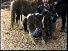 SmallHorse Press Grooming Your Miniature Horse ~ Video Trailer