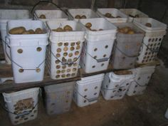 Potatoes in the Root Cellar Canning Food Preservation, Preserving Food, Self Sufficient Homestead, Storing Fruit, Canned Food Storage, Vegetable Storage, Root Cellar, Homestead Living, Canning Recipes