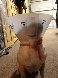 As if the cone of shame wasn't enough!