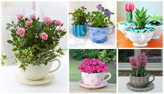 Inspire yourself with 12 cheap ideas for garden in a tea cup!