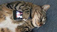 """Résultat de recherche d'images pour """"cats and smartphone"""""""