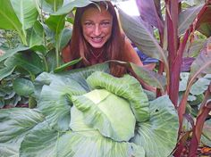 Tropicals and Cabbage in Bed Together - How My Dream of Alton Brown Inspired Garden Art Design - Shawna Coronado